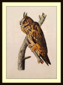 Long-eared owl, my favorite